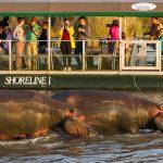 st lucia activities & safaris