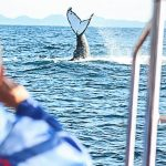 whale watching st lucia south africa