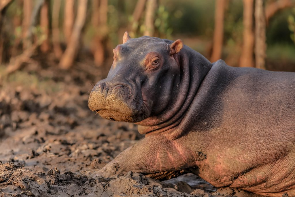 best place to see babay hippos south africa