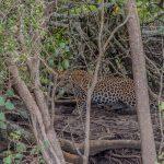 st lucia boat tours & leopard