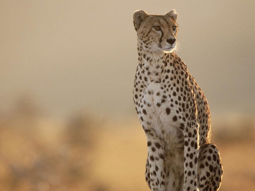 half day hluhluwe-imfolozi park safari