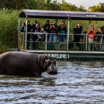 st lucia hippo trips and outings