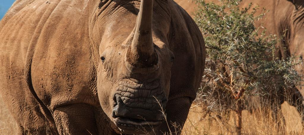 hluhluwe umfolozi safari options