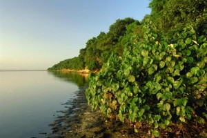 coastal forest wetland park