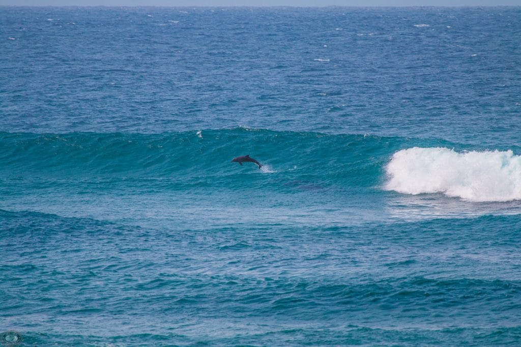 cape vidal dolphins