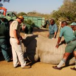 staff with white rhino
