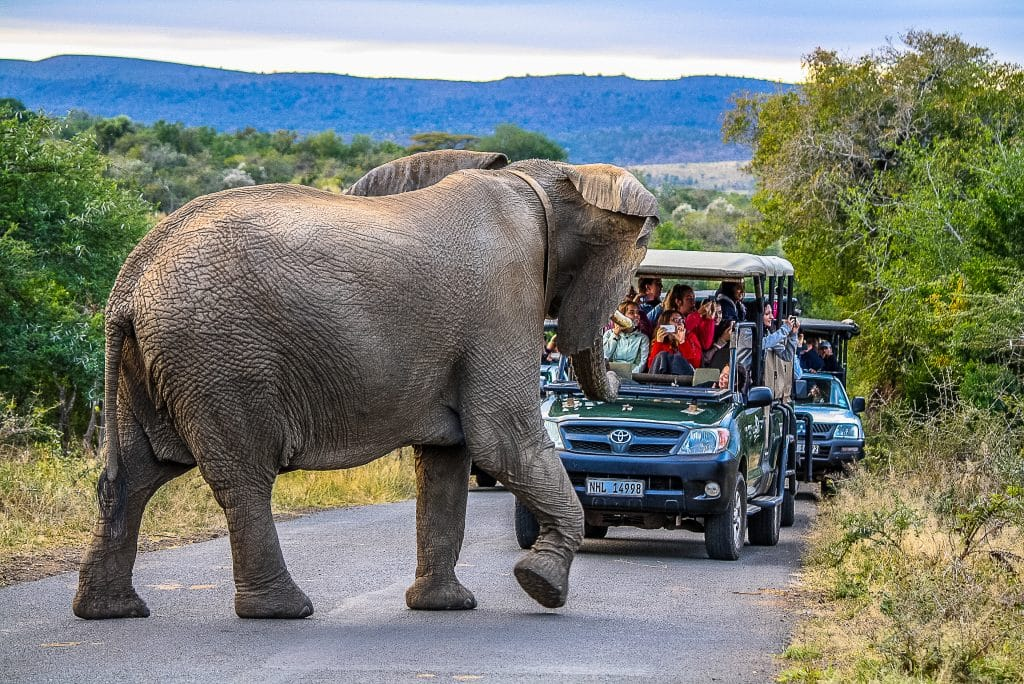 3 night safari package st lucia south africa