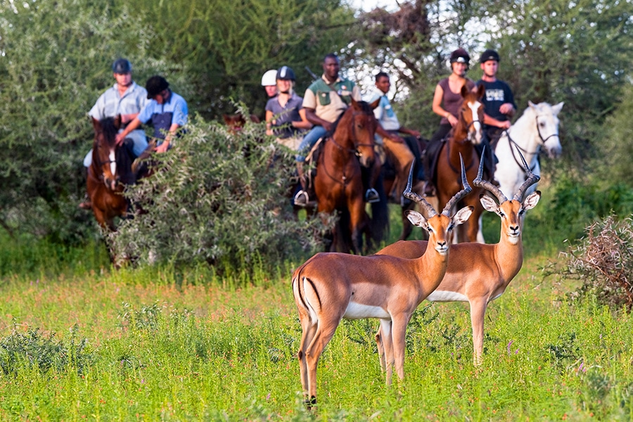 horse back riding and wildlife