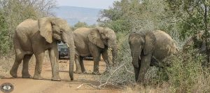south africa safari tour packages