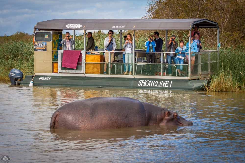 clients up close to hippos in boat cruise st lucia