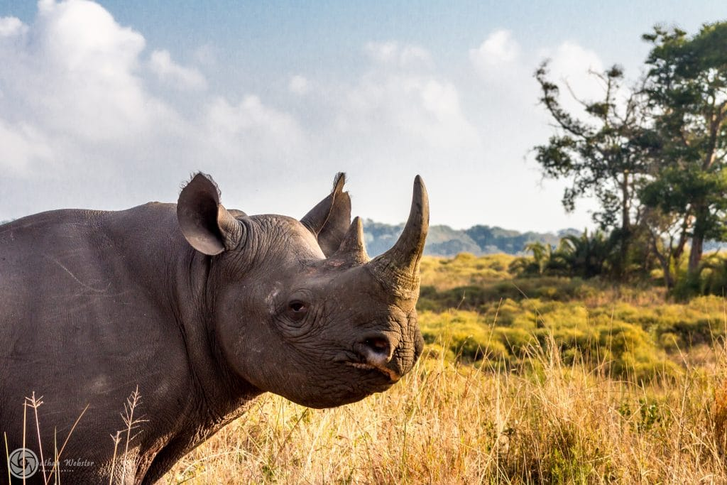 isimangaliso wetland park full day safari tour to cape vidal south africa