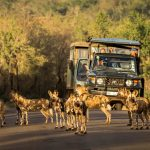 safari holiday packages south africa