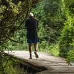 mangroves view on walking trail