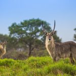 guided walks in the isimangaliso wetland park