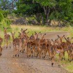 isimangaliso wetland park guided walks
