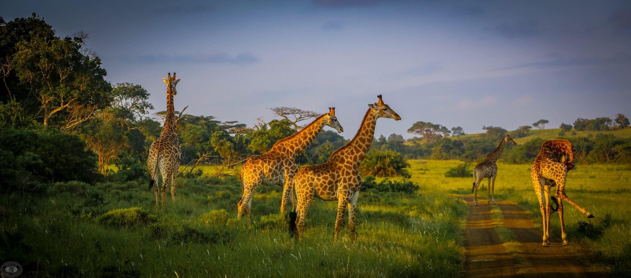 iSimangaliso St Lucia Animals