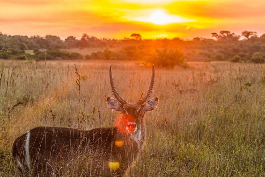 wildlife on sunset drives