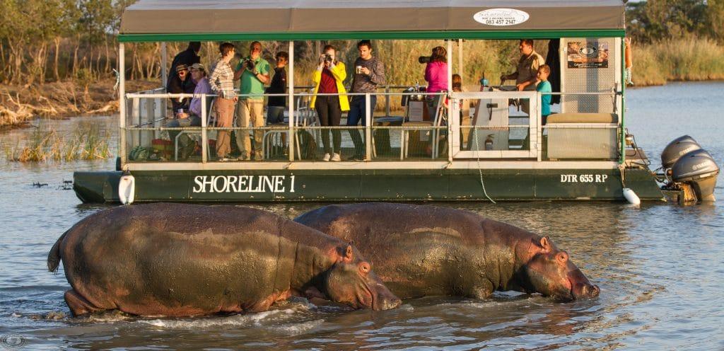 hippo & croc boat cruise st lucia estuary