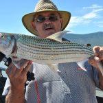 3 kg tiger fish caught