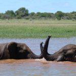 GMI Safaris Lake Jozini boat cruise Elephants