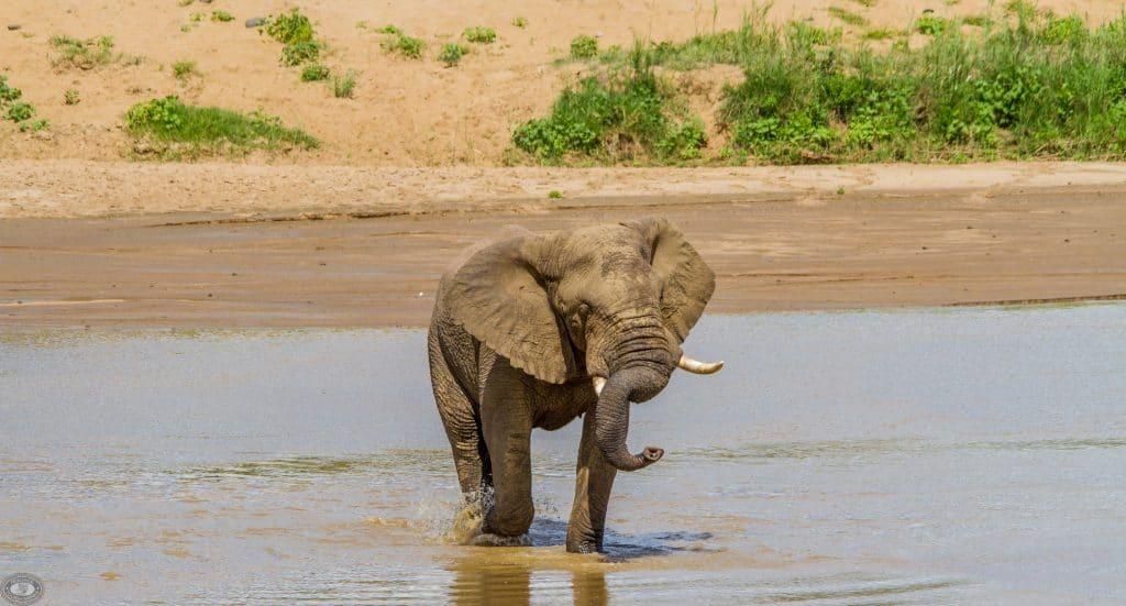 elephant in the jozini dam