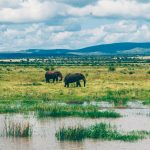 elephants on the jozini boat cruise