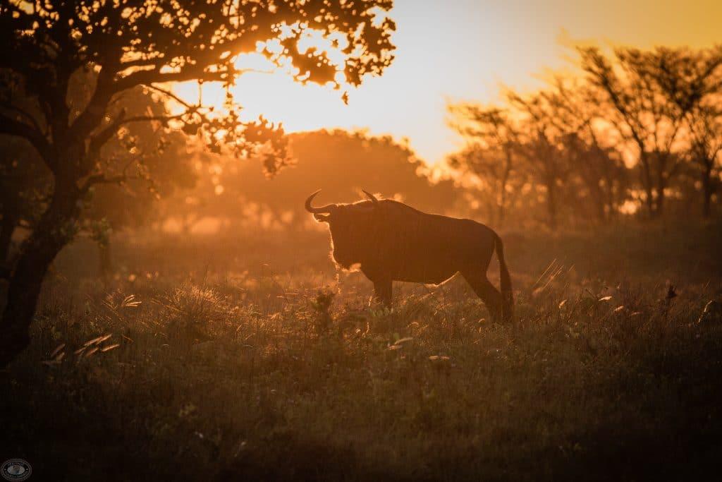 wildlife species st lucia sunset safari