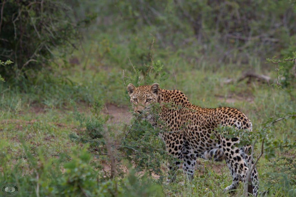 cape vidal safari