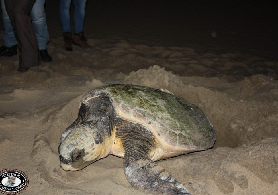 Turtles St Lucia Tours