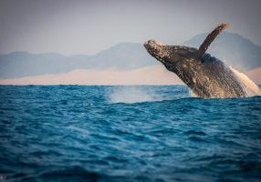 whale sightings st lucia 2019